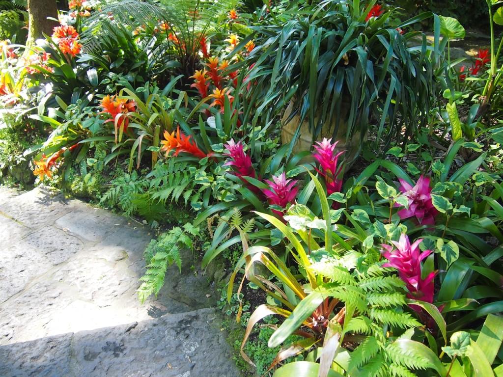 南国から集められた鮮やかな植物もたくさん