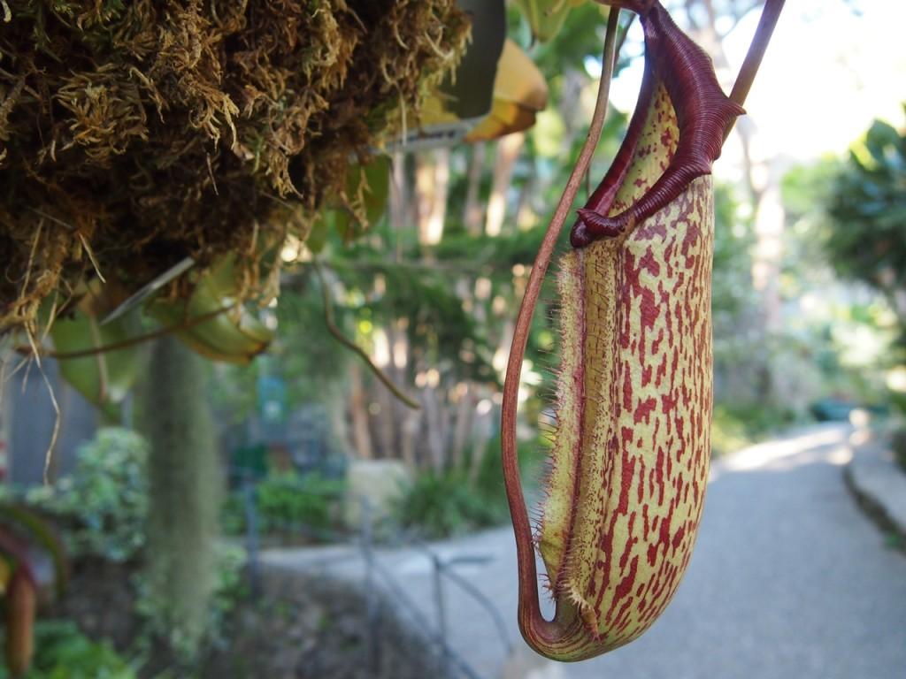 世界中から珍しい植物が集められていました